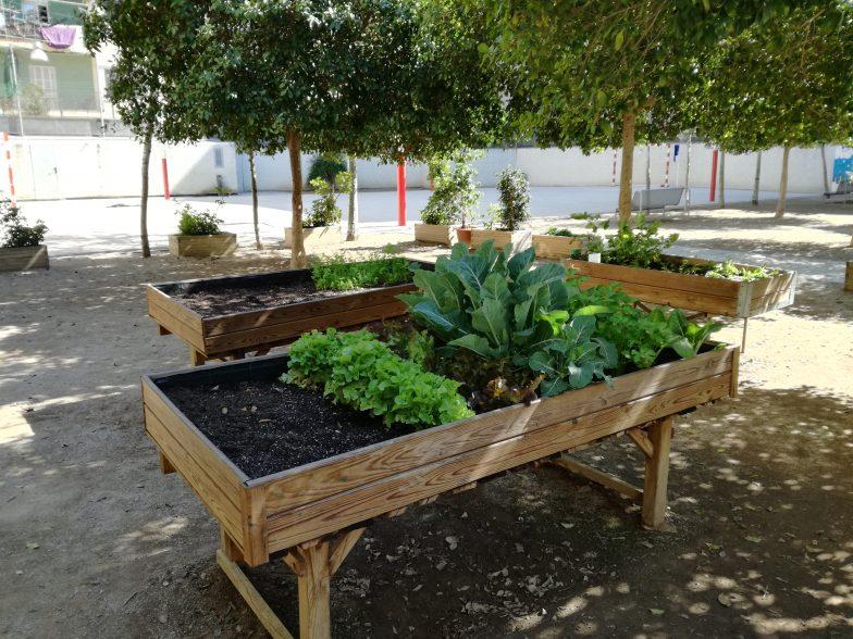 Transformamos los patios escolares en jardines