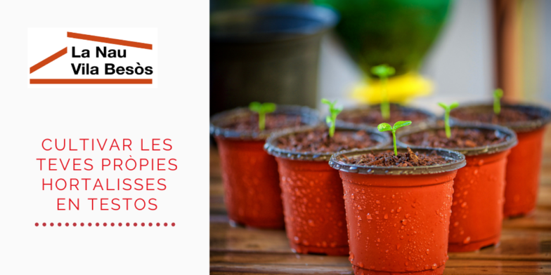 T'atreveixes a cultivar les teves pròpies hortalisses en testos?