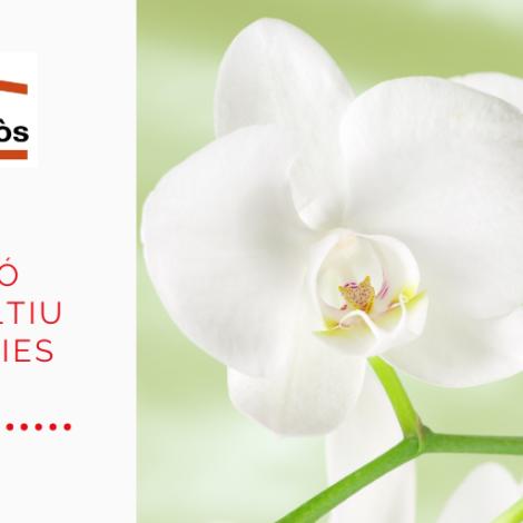 Cultiva orquídies i contribueix a un món més verd!