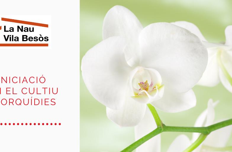 Taller cultiu orquidees